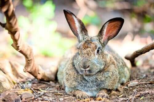 토끼가 비만인지 확인하는 방법