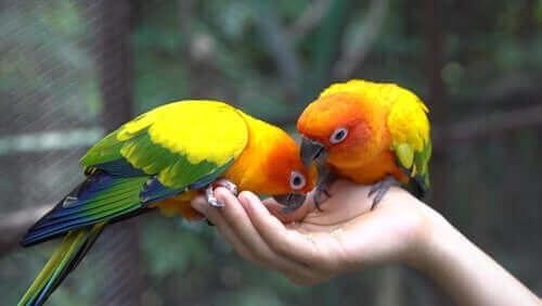 앵무새의 식단과 영양