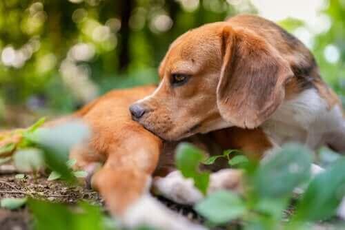 개에게 구충이 필요한지 알아보는 5가지 팁