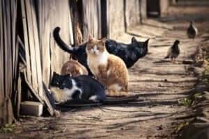 고양이는 사람에게 매개체