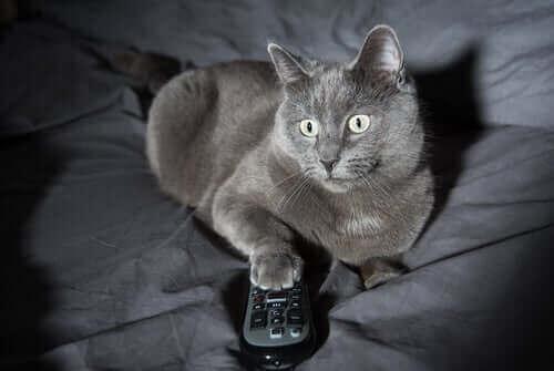 고양이가 이상한 야간 행동을 하는 4가지 이유