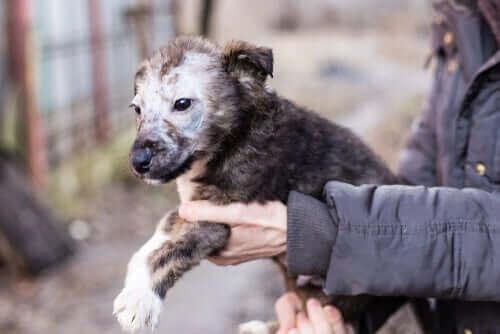 인수 공통 전염병인 강아지 백선증 증상과 치료법