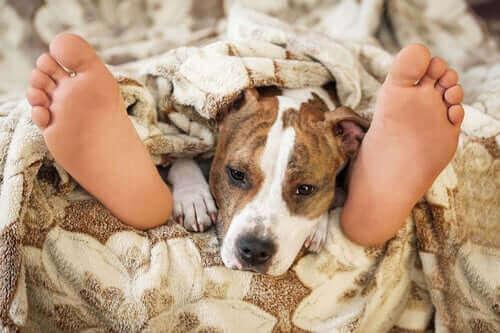중요한 질문: 반려동물과 함께 자도 안전할까?