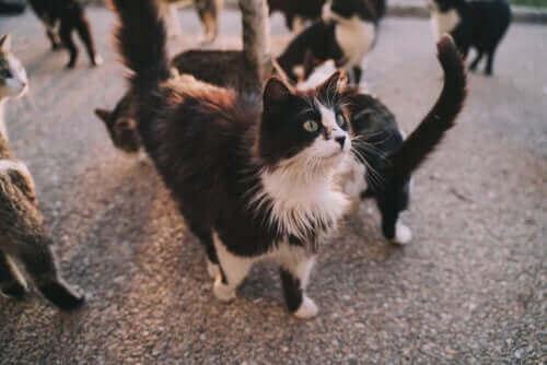 고양이는 사람에게 어떤 질병을 옮길 수 있을까?