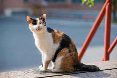 고양이 피부암 식단