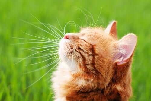 고양이 면역력을 강화하는 방법은 무엇일까?