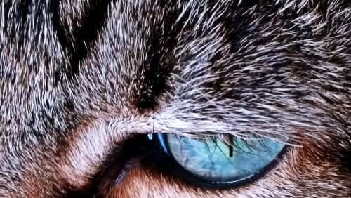 건강 상태를 말해주는 고양이 털빛 변화