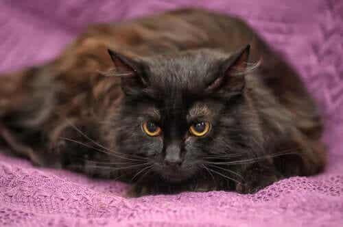 고양이 털빛 변화 구리 결핍