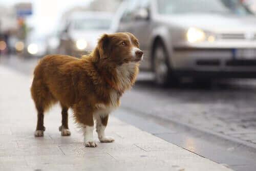 반려동물 도난 또는 실종 시 어떻게 대처해야 할까?