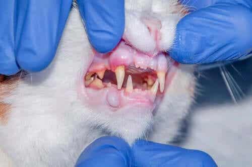고양이 이빨 구내염