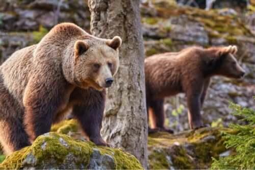 온난화 현상이 유라시아불곰 생태에 미친 영향