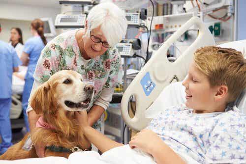 동물 매개 치료 교감