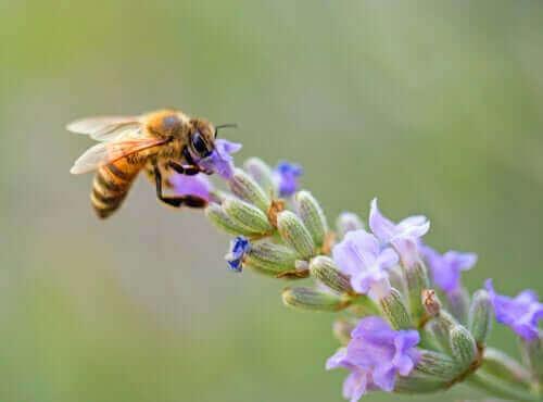 인류의 삶에 유익한 비행 곤충, 벌의 삶과 그 특징