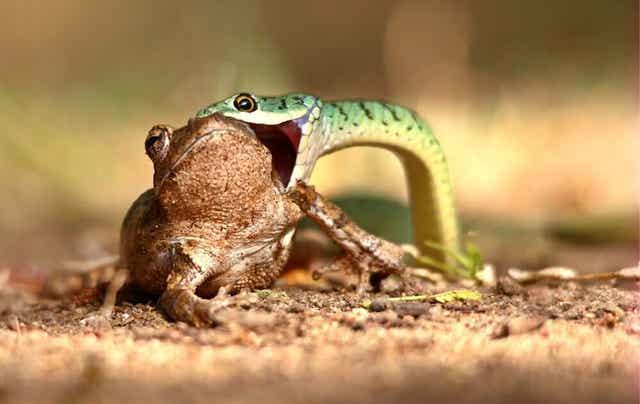 파충류를 반려동물로 먹이 급여