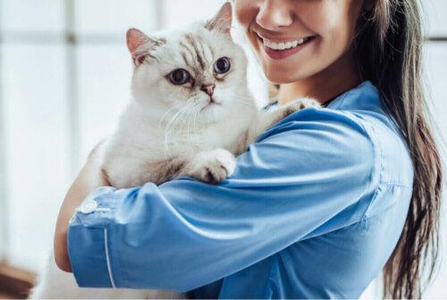 고양이 말단 거대증 증상과 치료법 알아보기