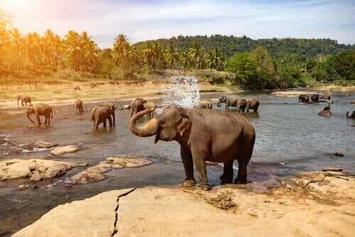 야생 코끼리 먹이