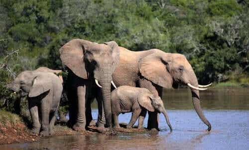 야생 코끼리 새끼 보호