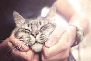 고양이의 수명 건강 관리