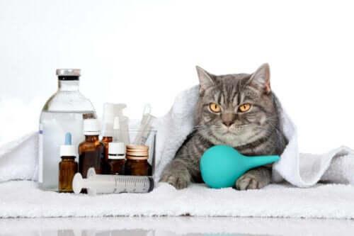 가장 흔히 발생하는 고양이 유전병 6가지