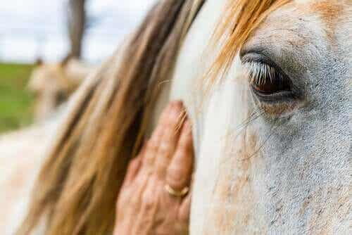 말 백선증 안장 마찰