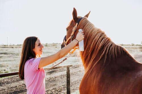 말 백선증 진단 및 치료 방법 알아보기