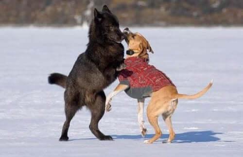 편견을 깬 늑대, 로미오와 개의 아름다운 우정