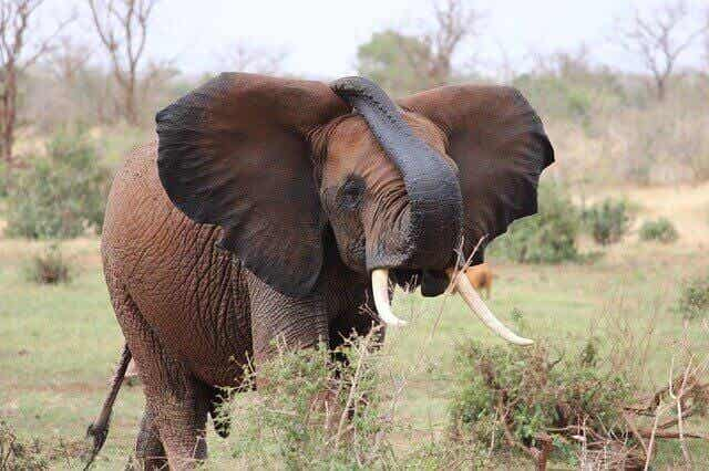 코끼리가 걸릴 구제역