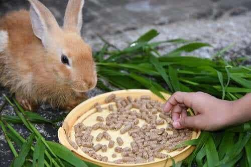 거식증에 토끼