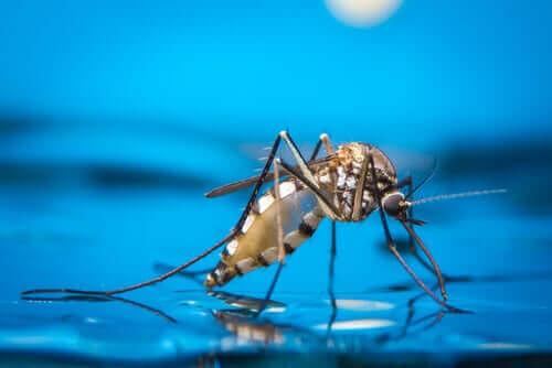 흔히 볼 수 있는 반려견 벌레 물림 증상과 관련 곤충
