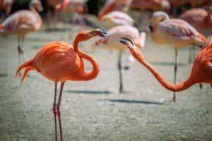 초식 동물들의 경쟁 먹잇감