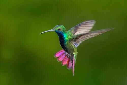 화려한 색감을 자랑하는 베네수엘라와 콜롬비아 벌새