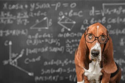 반려견의 지능 자극은 과연 효과가 있을까?