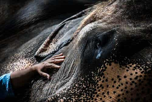 코끼리가 걸릴 코끼리 내유성 헤르페스바이러스