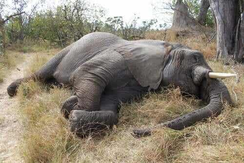 코끼리가 걸릴 뇌심근염
